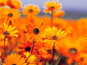 Testgalerie, Orange Blumen
